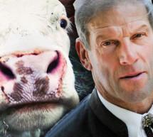 """""""Rinder nicht erschrecken"""""""