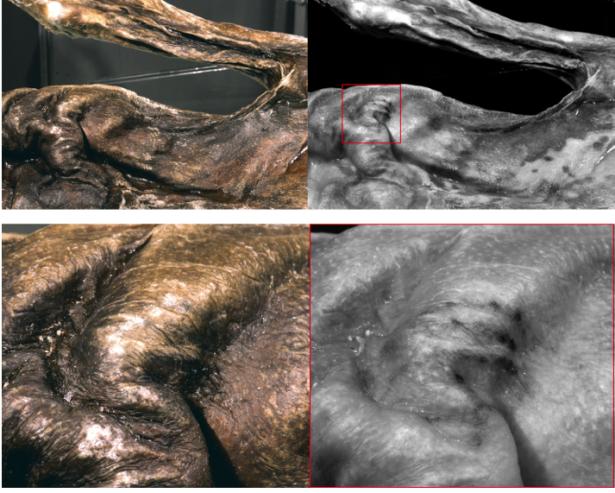 Die Tätowierung auf dem Brustkorb: Bild, wie es mit bloßem Auge sichtbar ist (links) und am Computer überarbeitetes Bild (rechts)