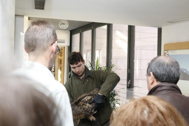 """Francesco Viglia vom Bozner Vogelpflegezentrum """"Avifauna"""" half das verschreckte Tier zu bergen. (Fotos: LPA)"""