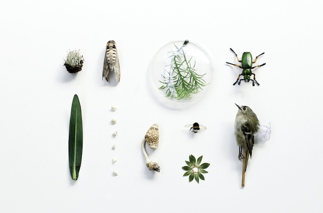 Fotografie von Irene Hopfgartner: Spiel mit Natürlichkeit und Künstlichkeit.
