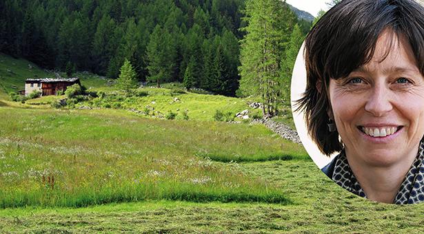 Idyllic alpine meadow in Ahrntal, South Tyrol