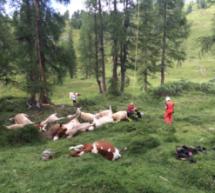 Blitz tötet 18 Kühe