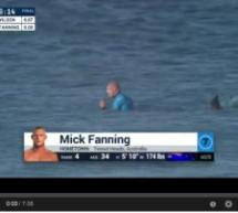 Die Hai-Attacke