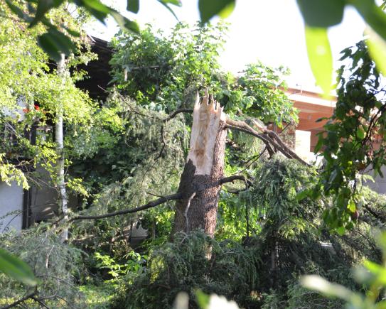 Der vom Blitz getroffene Baum (Foto: FF Marling)
