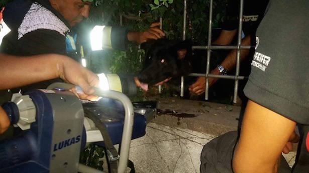Missliche Lage: Hund bleibt im Zaun stecken (Fotos: FF Leifers)