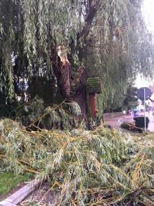Umgestürzter Baum (FF St. Lorenzen)