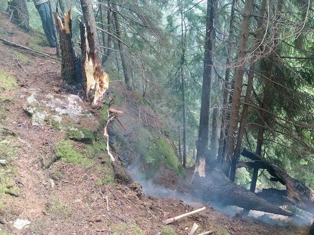 Der vom Blitz getroffene Baum (Fotos: FF Moos)