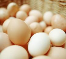 Der Eier-Appell