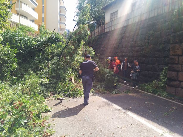 Baum umgefallen