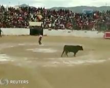 Stier stürmt Tribüne
