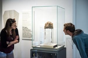 Ötzis Bärenfellmütze (Foto: Archäologiemuseum)