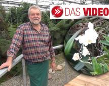 Die Orchideen-Oase