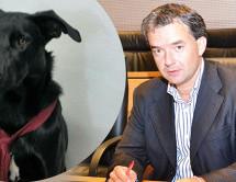 Hund mit Krawatte