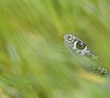 In der Schlangengrube