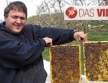 """Millionen tote Bienen"""