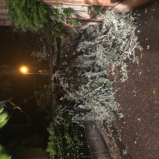 Umgestürzter Baum in Bozen