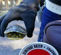Schildkröte auf Radweg