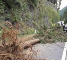 Baum kracht auf Straße