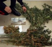Cannabis in Gossensaß