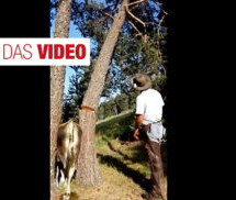 Die Kuh-Befreiung