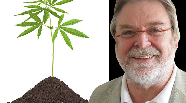 15467773 - cannabis plant in soil