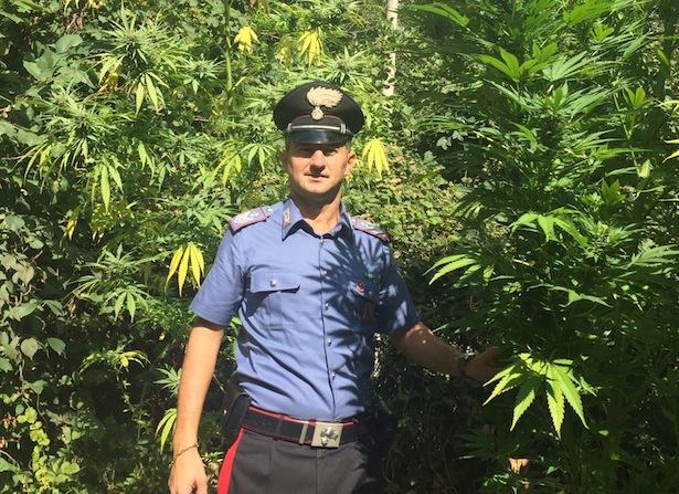 i carabinieri all'interno della piantagione di glorenza