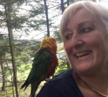 Entflogener Papagei