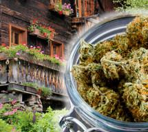 Der Marihuana-Bauer
