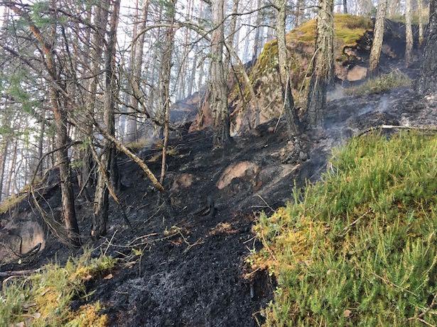 Waldbrand Kohlern (Fotos: FF Bozen)