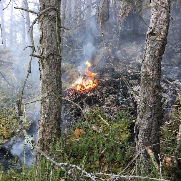 Waldbrand Kohlererberg
