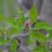 Frühe Blüte