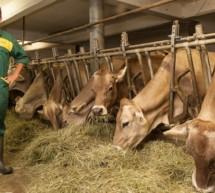 Was ist uns die Milch wert?