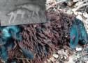 Schaf von Hund gerissen