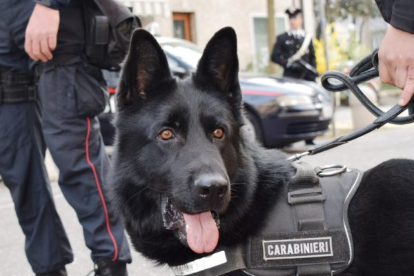20170413-unita-cinofila-antidroga-dei-carabinieri-di-bolzano-impegnata-nelloperazione