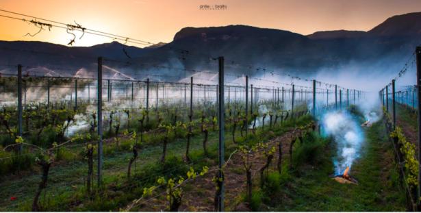 Frostschutzberegnung und Feuer im Weingut gegen die morgendlichen Minusgrade in Tramin (© Antie Braito Photography)