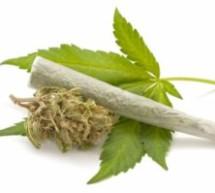 Marihuana im Auto