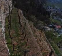 Neue Weinbauflächen