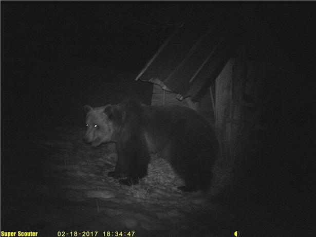 Mann im Trentino von Bär gebissen