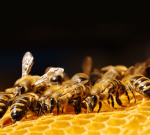 Vergiftete Bienen