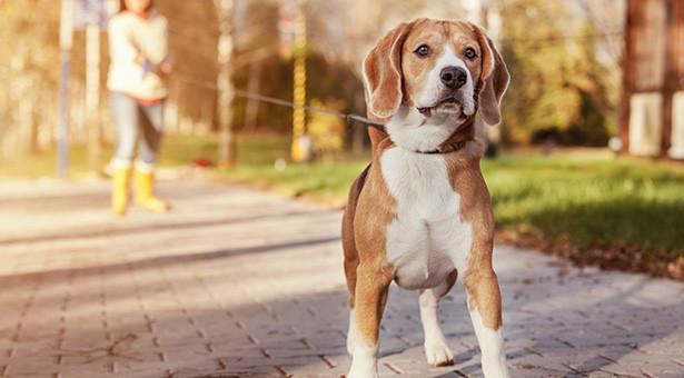 DNA-Register für Hunde
