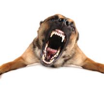 Hund beißt Frau