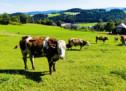 """""""Opposition gegen Bauern"""""""