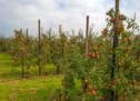 Wassersparende Bauern