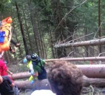 Schwerverletzter Waldarbeiter