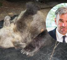 Braucht es eine Bären-Jagd?