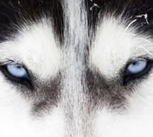 Mahnfeuer gegen Wolf