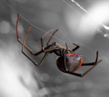 Spinne im Saft