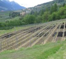 Das Wood up-Projekt