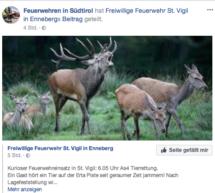 Liebestoller Hirsch