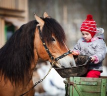 Gestresste Ponys?